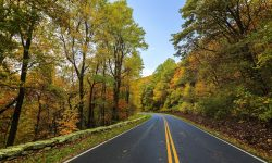 Road with Fall Leaves